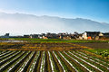 Vegetable farm and farmer s house Stock Photo