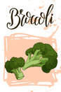 Vegetable food banner. Broccoli sketch. Organic food poster. Vector illustration