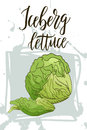Vegetable food banner. Iceberg lettuce sketch. Organic food poster. Vector illustration