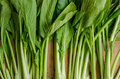 Vegetable, Fresh Green Chinese Cabbage, Bok Choy, Pok Choi or Pa Royalty Free Stock Photo