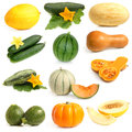 Vegetable and fruits collection cucurbitales on a white background Royalty Free Stock Photos