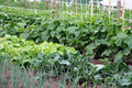 A vegetable garden Royalty Free Stock Images