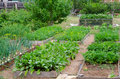 Vegetable garden beds at kitchen with various vegetables Royalty Free Stock Photo