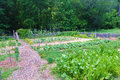 Vegetable Garden at Booker T. Washington National Monument Royalty Free Stock Photo