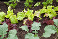Vegetable garden close up of a with different vegetables Royalty Free Stock Image