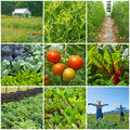 Vegetable garden gardening summer collection of images Stock Image