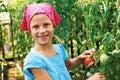 Vegetable garden - lovely gardener with harvests of  tomatoe Royalty Free Stock Photo
