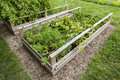 Vegetable garden in raised boxes backyard wooden beds or Royalty Free Stock Images