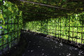 Vegetable garden shady creeping plant Royalty Free Stock Photo