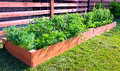Vegetable garden small by the side of the house Stock Photo