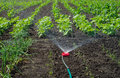Vegetable garden watering Royalty Free Stock Photography