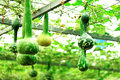 Vegetable greenhouse Royalty Free Stock Images