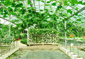 Vegetable greenhouse Royalty Free Stock Image
