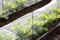 Vegetable greenhouse agricultural for farming of vegetables Stock Images