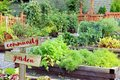 Vegetable and herb garden. Royalty Free Stock Photo