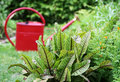 Vegetable and herb garden watering Royalty Free Stock Photo