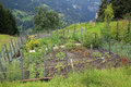 Vegetable kitchen garden growing lots of vegetables and herbs Royalty Free Stock Photo