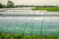 Vegetable plastics film greenhouses Royalty Free Stock Photo