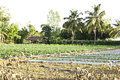 Vegetable plot in the countrysede Royalty Free Stock Photography