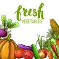 Vegetables colorful sketch