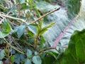 Zelenina plodina poľa zelenina listy špargľa predstavca fazuľa semená červená repa korene brokolica kvety repa mrkva reďkovky sladký potiahnuté