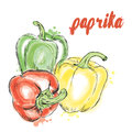 Vegetables drawn by hand. Vector vegetables. Food. Stock meal. Paprika. Bell pepper.