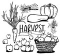 Vegetables and fruits harvest of black white jpg include path eps Stock Photo