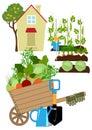 Vegetables garden Royalty Free Stock Photo