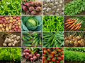 Vegetables and greens Royalty Free Stock Photo