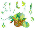Vegetables and greens set with basket hand drawn Stock Photography