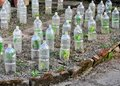 Vegetables growing secured in plastic bottles Royalty Free Stock Photo