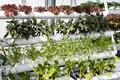 Vegetables hydroponics in greenhouses. Royalty Free Stock Images