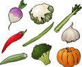 Vegetables illustration Royalty Free Stock Photos