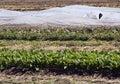 Vegetables on organic farm Stock Photo