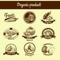 Vegetables sketch banner set Royalty Free Stock Photo