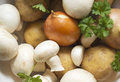 Vegetables for soup set of mushroom soup close up Royalty Free Stock Photos
