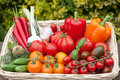 Vegetables from the weekly market Royalty Free Stock Photo