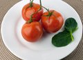 Vegetables on white plate three red tomato the vine with spinach leaves a round Stock Photography
