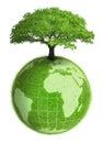 Rostlinný země