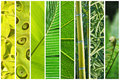 Vegetal green gradation collage abstract Stock Photo