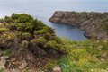 Vegetation and cliff at cap de creus costa brava spain in spring in front of a in the natural park of girona Stock Images