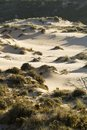 Vegetation on dunes Stock Image