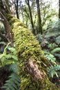 Vegetation found in Otway Fly Treetop Adventures Melbourne Australia Great Ocean Road