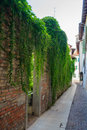 Vegetation on house view of green italy Stock Images
