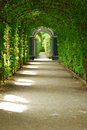 Vegetation tunnel Stock Photos