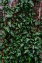 Vegetative background of green leaves Royalty Free Stock Photo