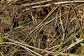 Vegetative natural texture of dry grass and leaves on the ground Royalty Free Stock Photo