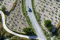 A vehicle drives down a road between fields of cultivated grape vines growing near Goreme in Turkey. Royalty Free Stock Photo