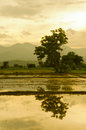 Veiw of field thailand rice in on sunsets Stock Images