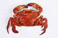 Velvet crab Stock Images